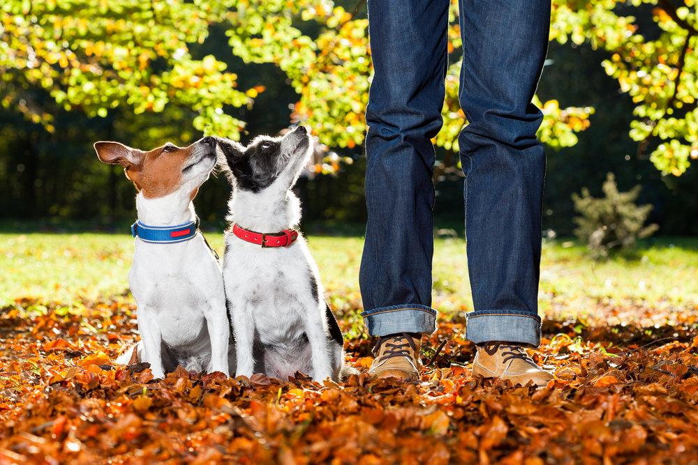 in-home-dog-training-central-nj.jpg