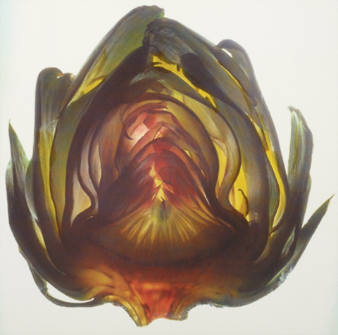 "ARTICHOKE|1997 |30"" x 30"""