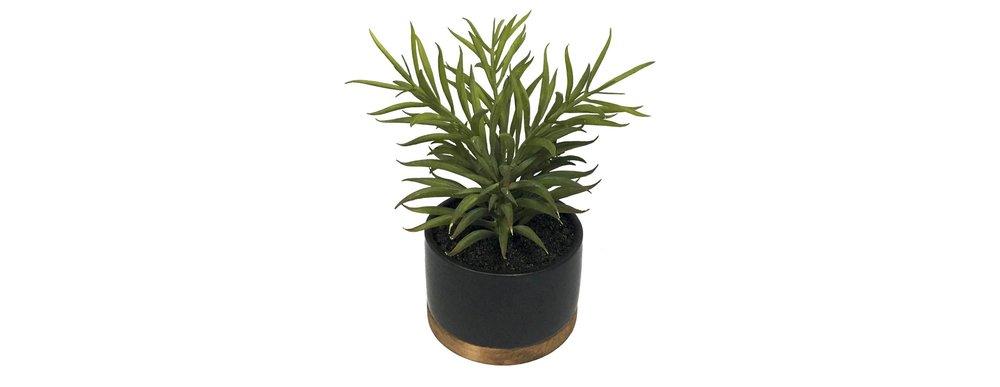Threshold Artificial Succulent