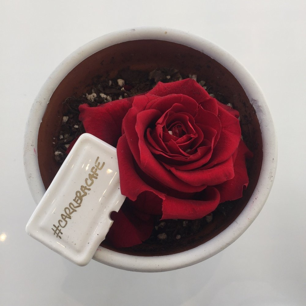 Roses and coffee.