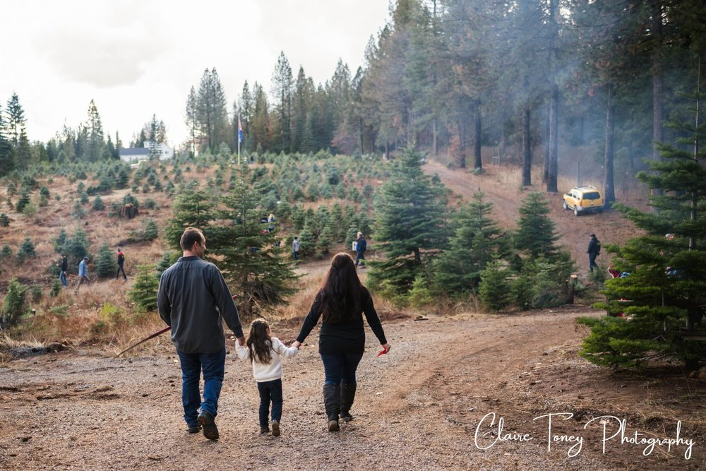 Family at a tree farm walking up a trail on the way to find their Christmas Tree