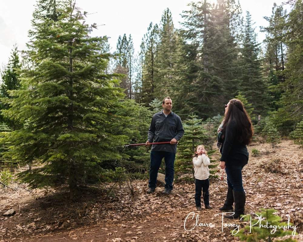 Dad is ready to cut down their Christmas tree at a tree farm and his daughter is grabbing her face
