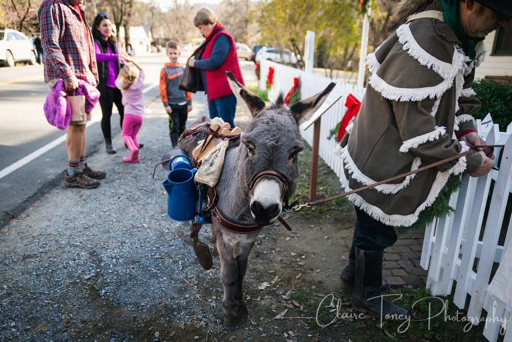 A donkey at Coloma during the Christmas season