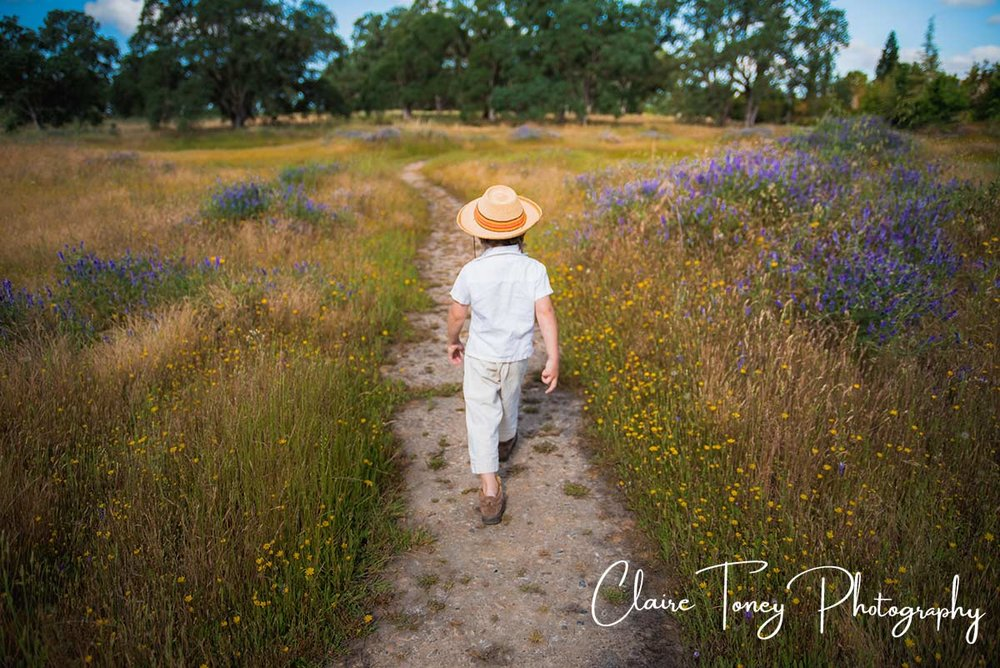 Little boy walking along a path with purple and yellow wildflowers
