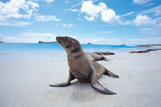 Galapagos    Galapagos Family Adventure