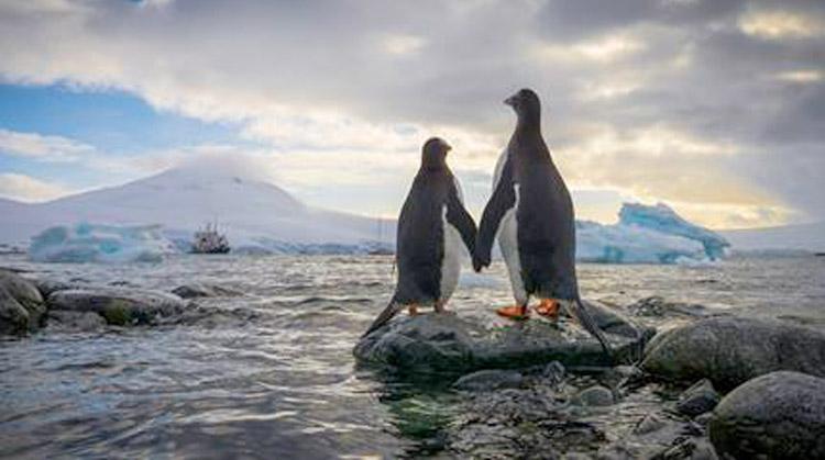 Antarctica     Are you a Photographer