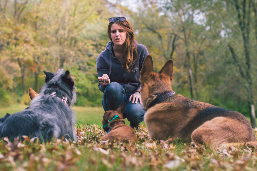 We are Joplin MO's premier dog training service - But don't just take it from us, hear what some of our clients have to say!