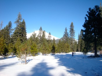 A Nordic ski trail at Mt. Shasta, California.