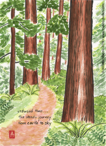"""redwood time"" is 11×14, painted with sumi ink and Japanese watercolors on paper. It is also available as a  greeting card  or print. © Annette Makino 2016"