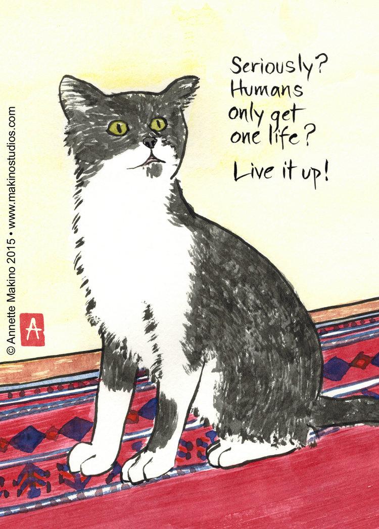 234 Funny Cat Birthday Card Makino Studios