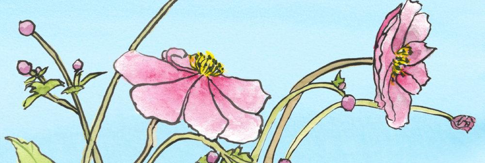 anemones-banner+2.jpg