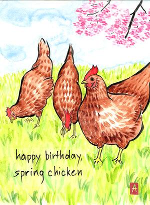 168 spring chicken birthday card makino studios 168 spring chicken birthday card bookmarktalkfo Choice Image