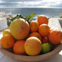 CUISINE-02-fruit.jpg