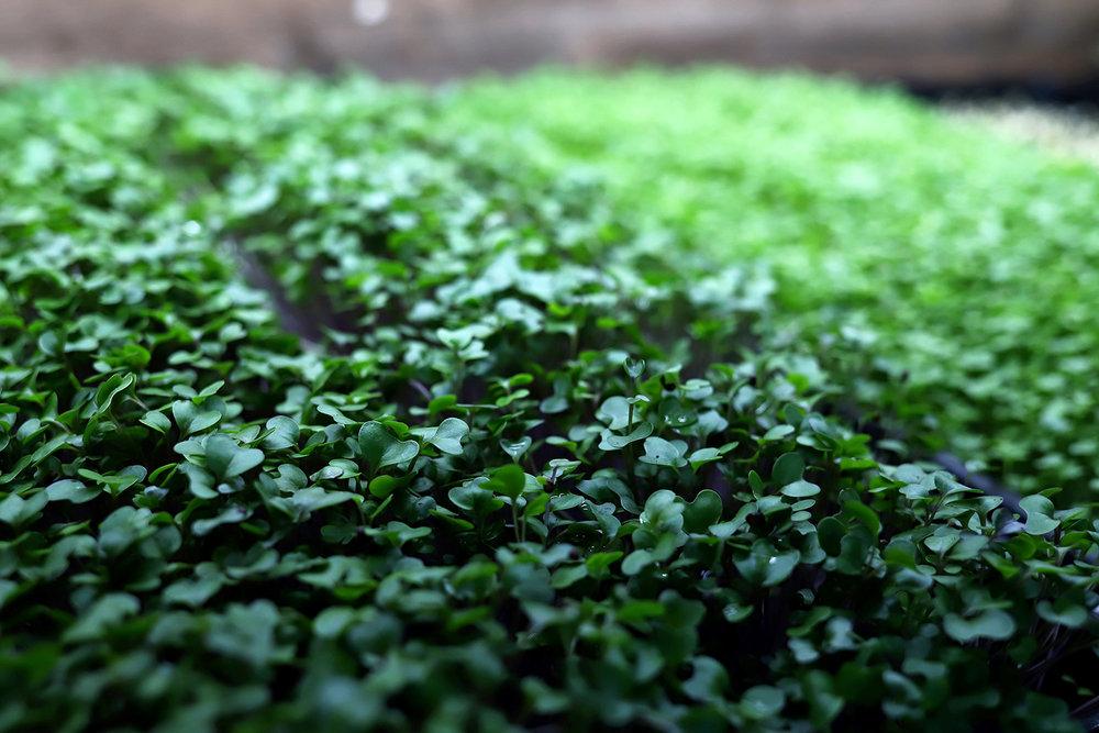 greens web.jpg