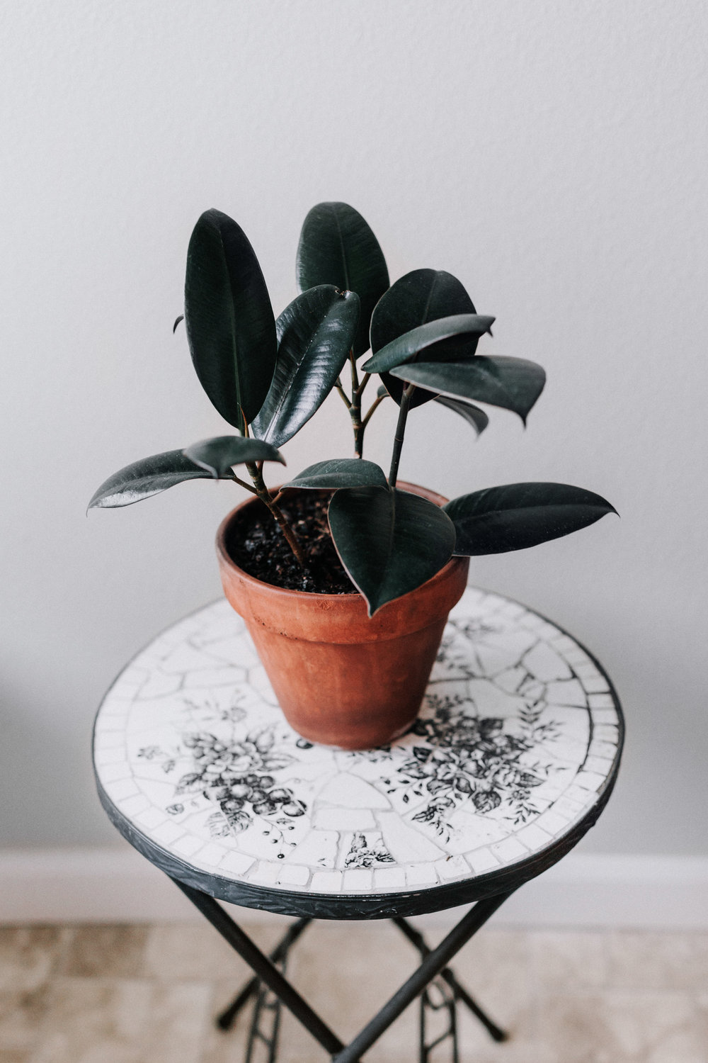 Rubber tree houseplant care guide - An easy care, large houseplant - Want to find your perfect houseplant? Take the quiz!