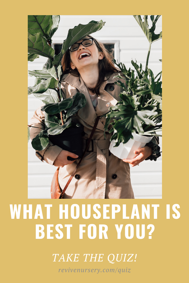 Find the best houseplant for you and your home - TAKE THE QUIZ #revivenursery