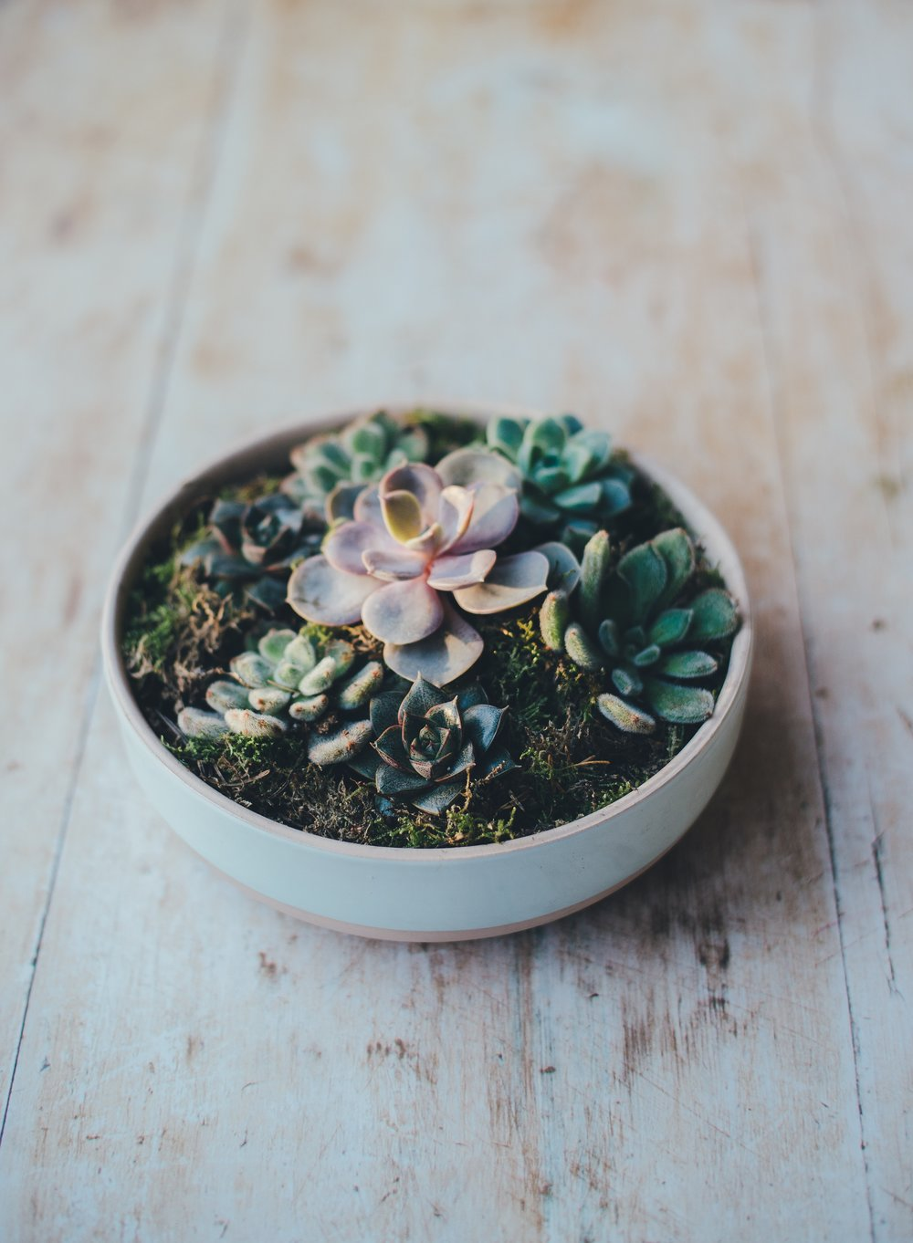 How to care for your succulents on Get Planty Podcast #revivenursery.jpg