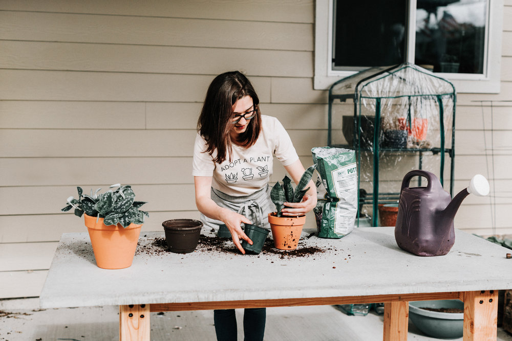 I can help you make oyour houseplants love you back! Sip & Grow: Houseplant Foundations Workshop