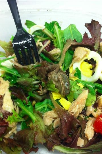 Dead frog in salad