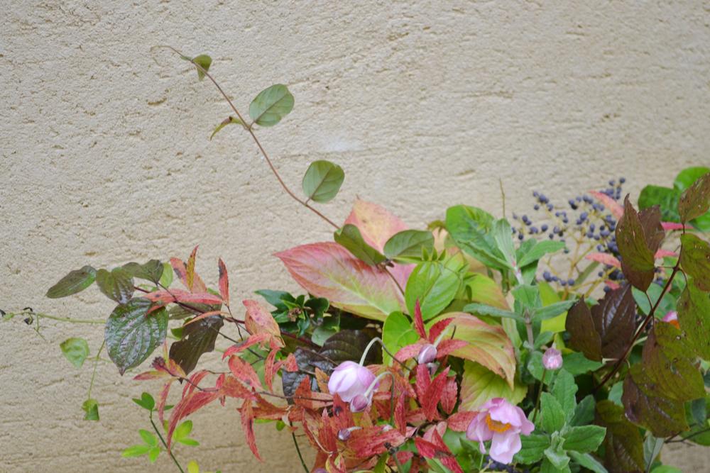 FLOWERS-DORDOGNE