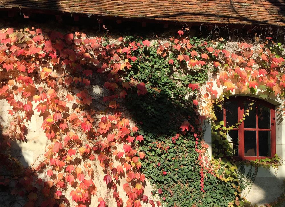 ivy-house-france