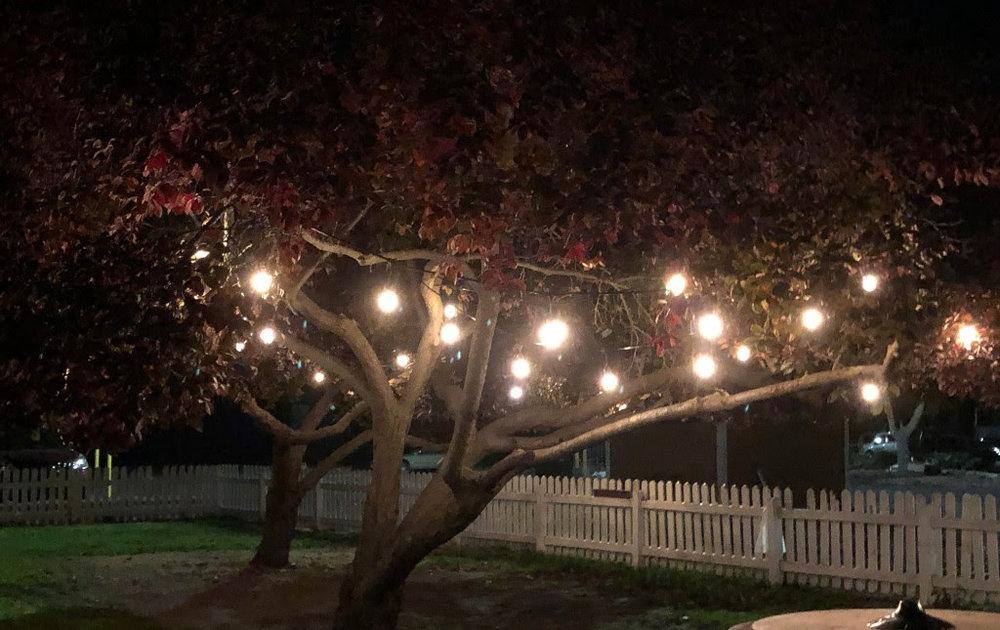 Trees in Yard.jpg