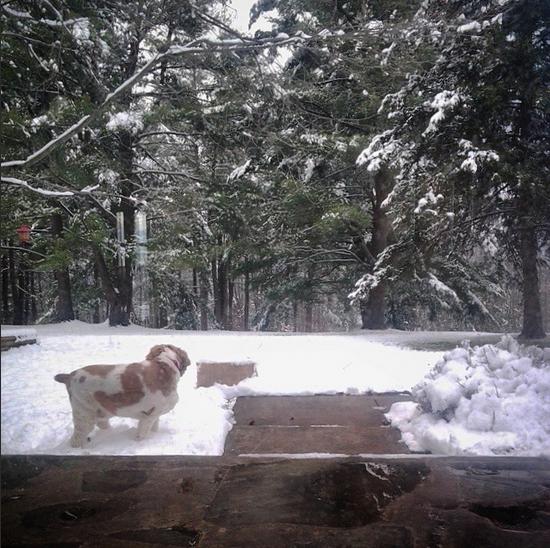 Snowy TGiving