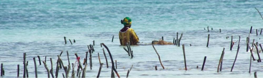 Seaweed Farmer in Tanzania