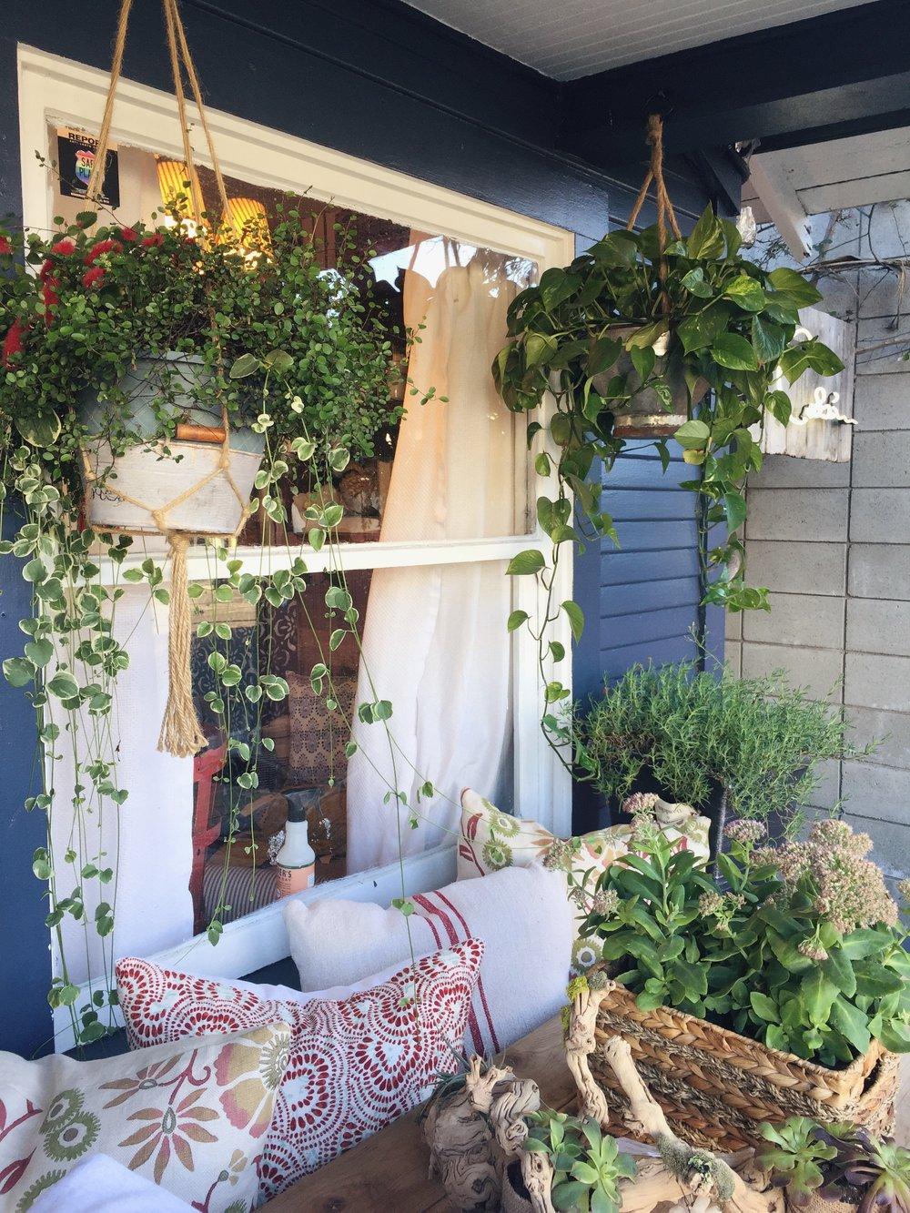 Tumbleweed & Dandelion, Venice, CA