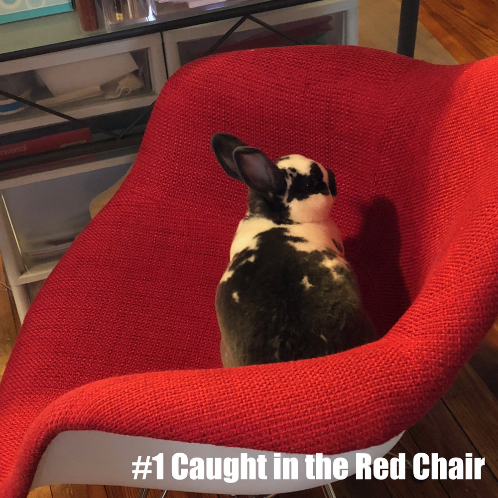 Mercy Noe knows the red office chair is off-limits but she also know red is HER color.