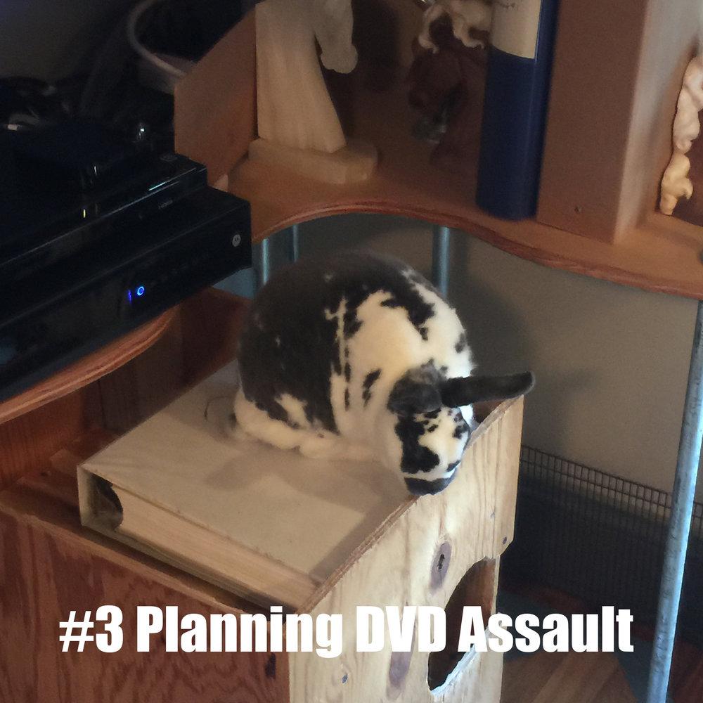 3 Planning DVD Assault.jpg