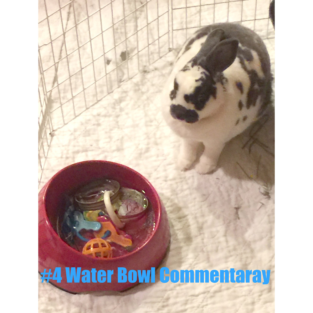 4 Water Bowl Commentary.jpg