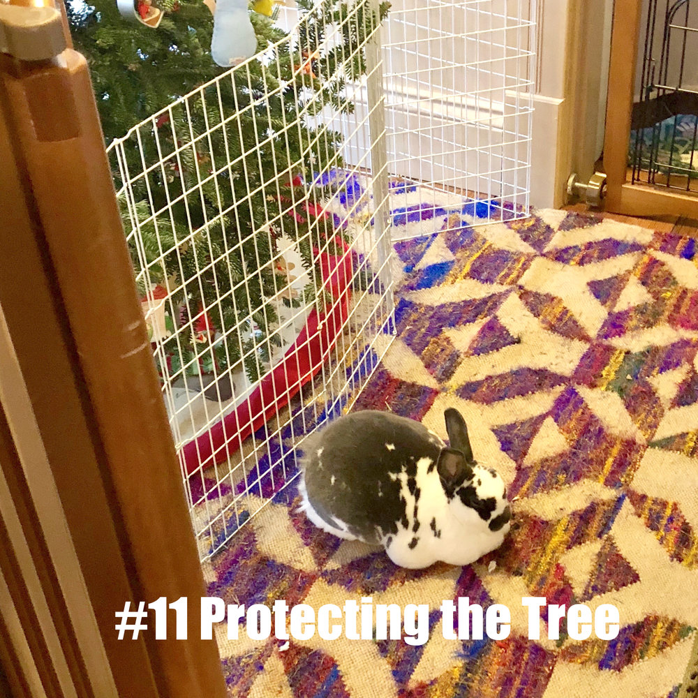 11 Protecting the Tree.jpg