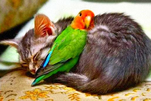 interspecies.friend4.jpg