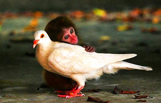interspecies.friend3.jpg