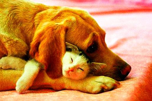 interspecies.friend6.jpg