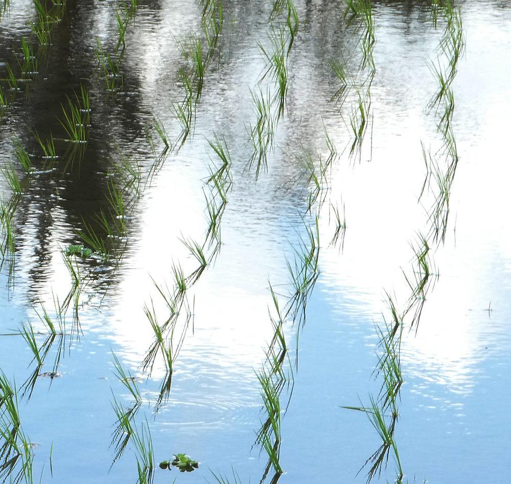 Bali-rice_web.jpg