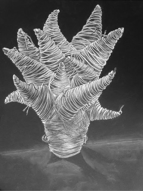 Study of Biome I (Salt)