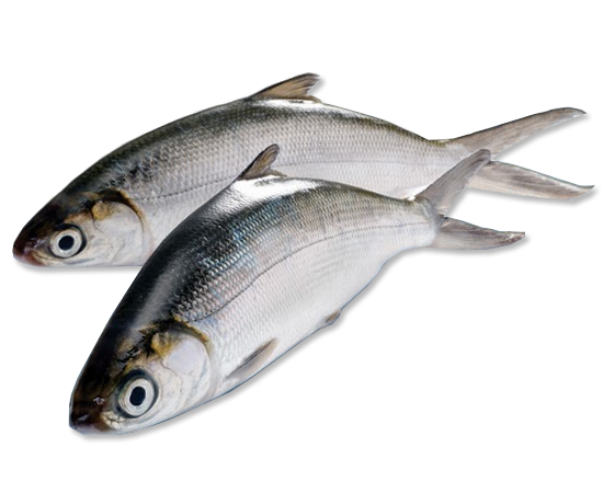 Milkfish  (otherwise known as Bangus)  is a customer favorite!