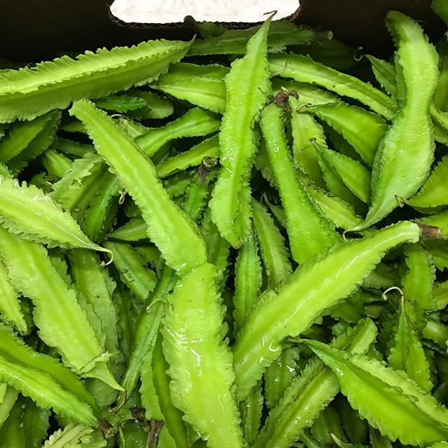 "🌱 WINGED BEANS They're beans, but they don't fly! In Tagalog, they're known as sigarilyas (think of the Spanish word ""cigarillo""). Try them sauteed with garlic, onions, tomato, and pork! 😋 — #wingedbean #goabean #dragonbean #sigarilyas  #ĐậuRồng #ប្រពាយ #exoticproduce"
