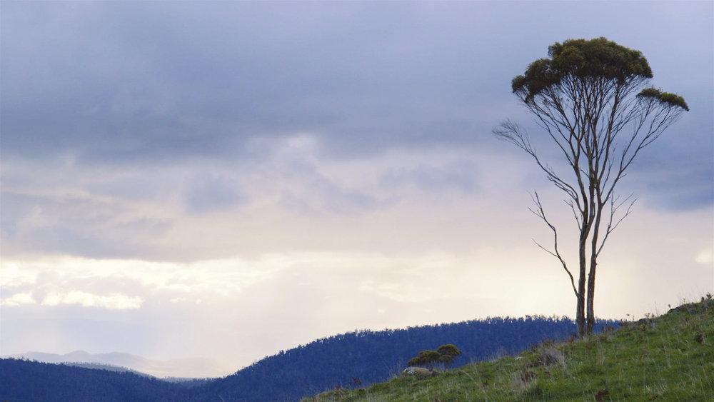 Frame 5 - tree.jpg
