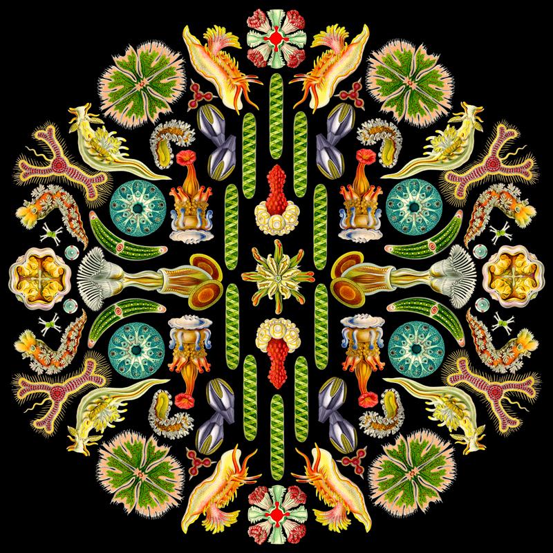 Haeckel Mandala