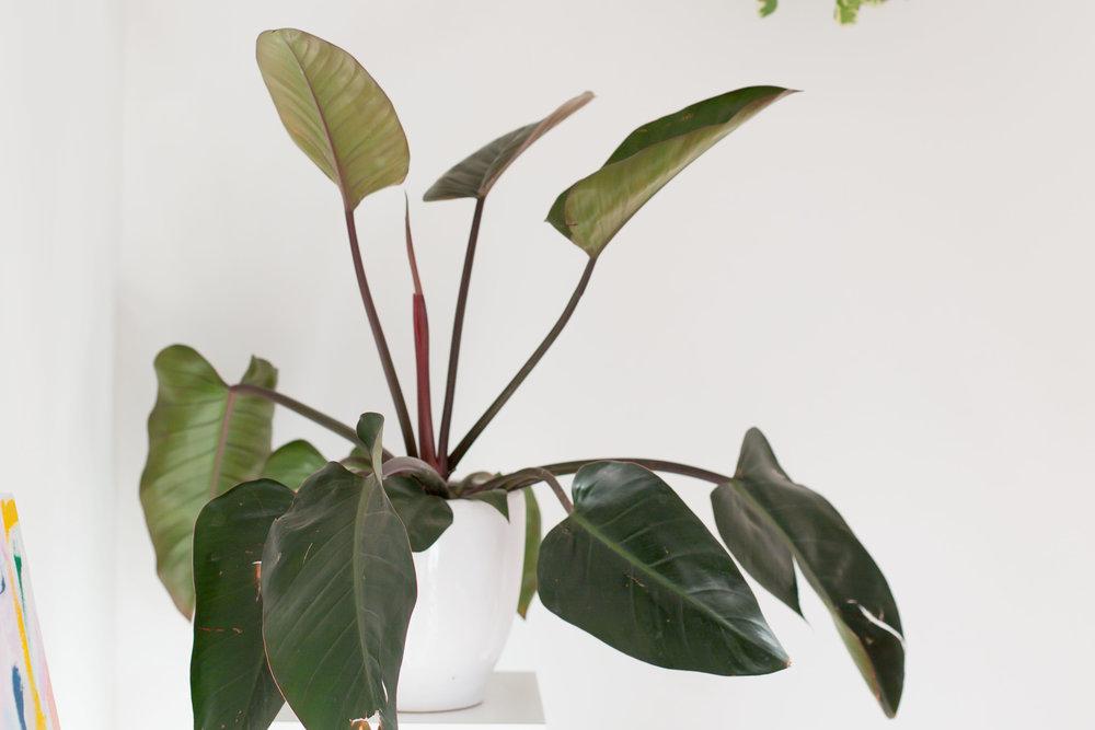 house-plant-san-diego-artist