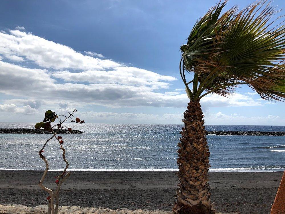 windy wind-blown tree tenerife.jpg