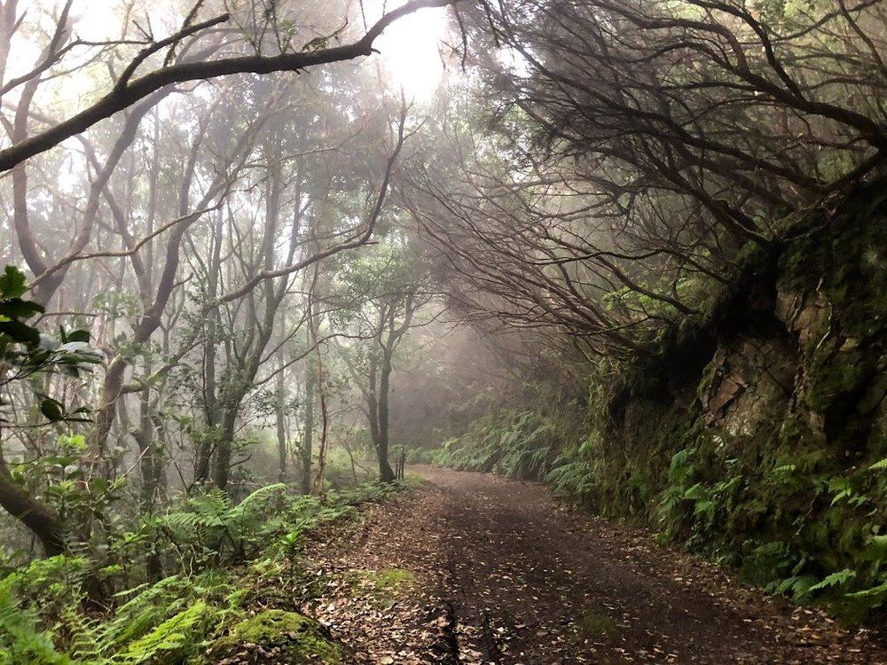 rainforest tenerife.jpg