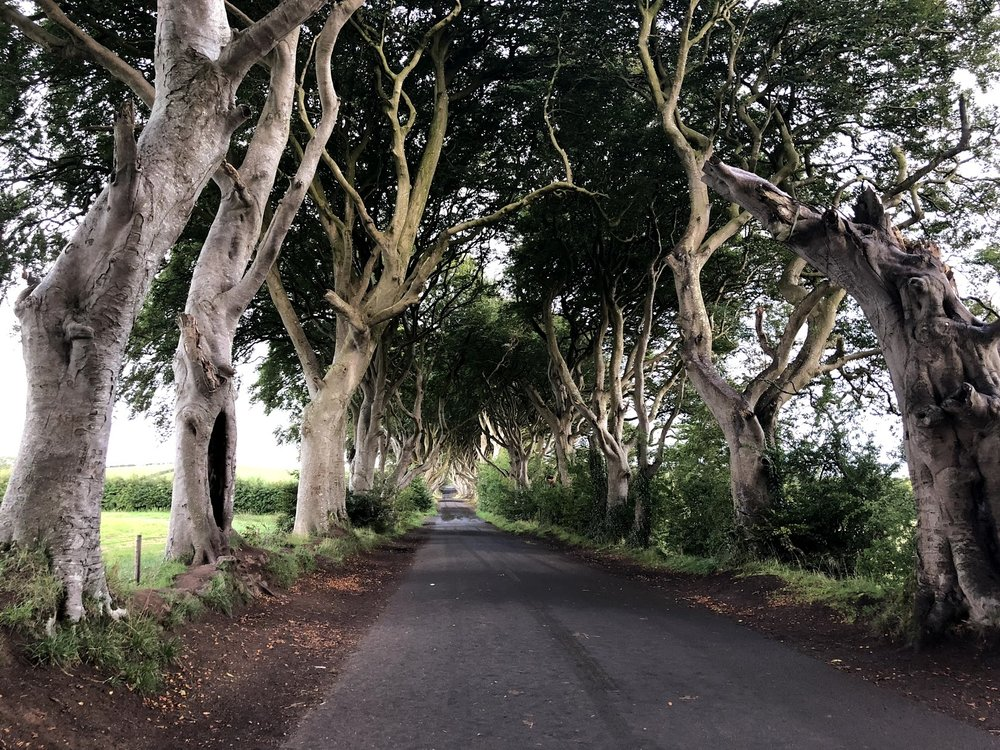 The Dark Hedges of Armoy   & Kings Road