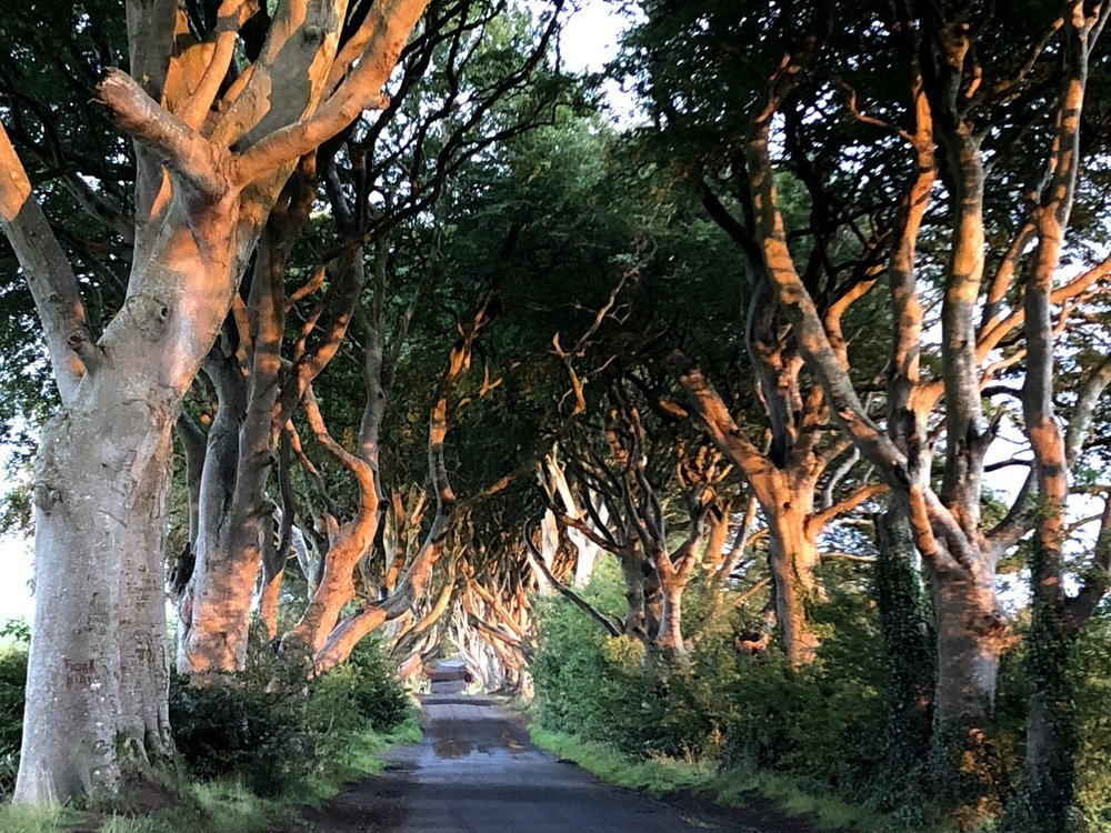 Dark Hedges Kingsroad Game of Thrones