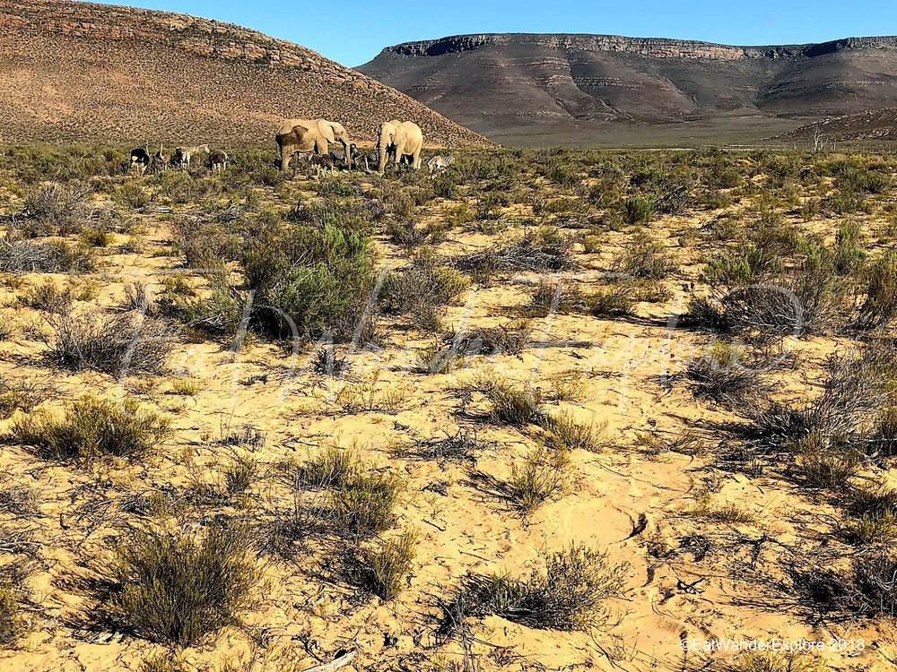 southafrica6.jpg