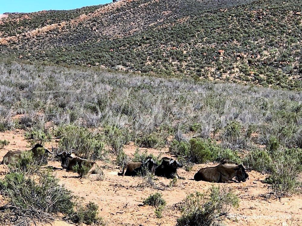 southafrica15.jpg