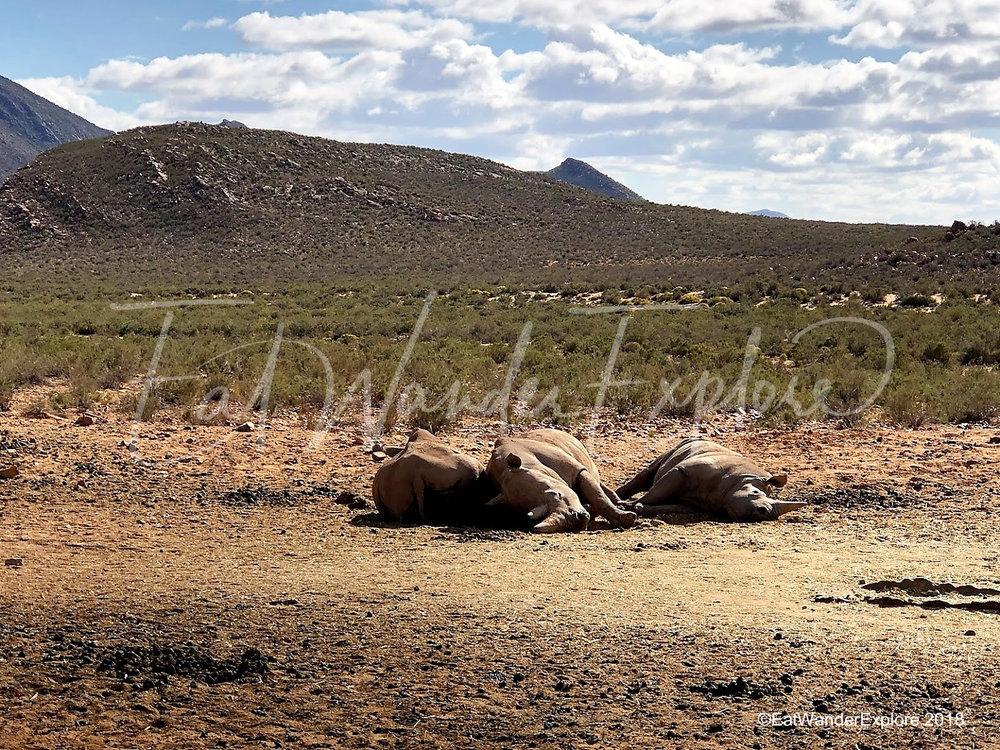 southafrica16.jpg